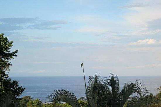 هوتل لوك أوت: vue sur l'océan depuis notre bungalow 