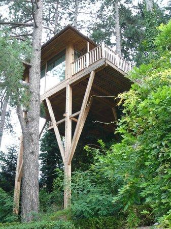 Meisters Hotel Irma:                   The Tree House