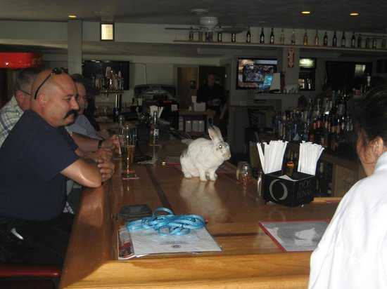 """Shooters: My Rabbit """"Narvik"""" Jumped On The Bar To Order Carrot Juice"""