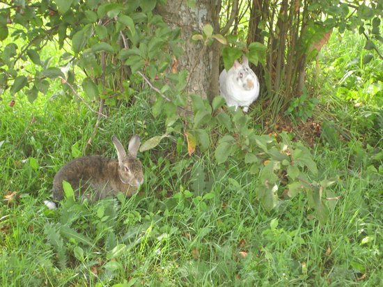 "Grand Northern Inn: My Rabbits ""Nautilus"" & ""Narvik"" Play Outside #2"