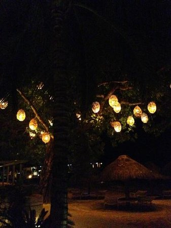 Presidente Inter-Continental Cozumel Resort & Spa: beach tree at night