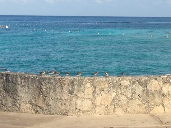 Presidente Inter-Continental Cozumel Resort & Spa: birds