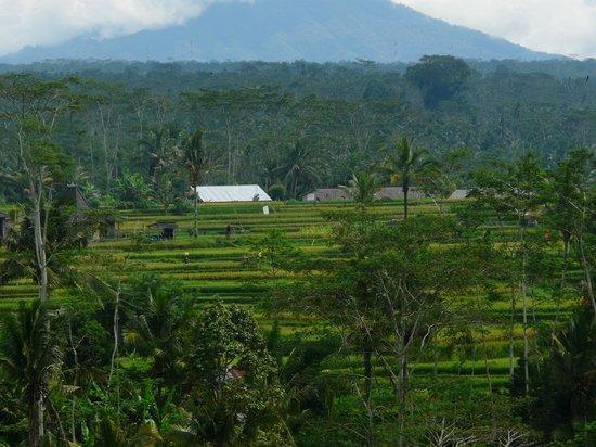 Made Parta (A Bali Driver) - Private Day Tours: ウブド郊外