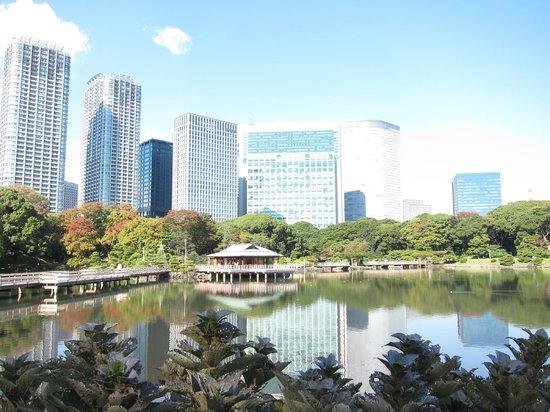 โรงแรมคอนราด โตเกียว: View from Hamarikyu garden