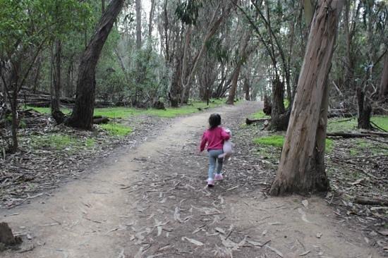 Coronado Butterfly Preserve: eucalyptus trees