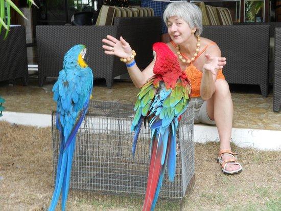 Sirenis Punta Cana Resort Casino & Aquagames:                   Беседа с отельными попугаями