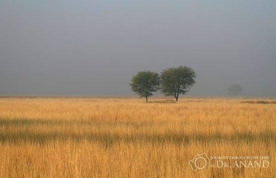 Tal Chhapar Sanctuary: Landscape