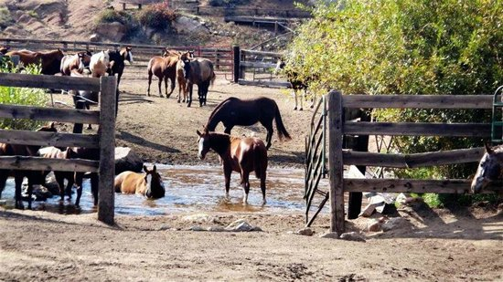 Lost Valley Ranch:                   Horses