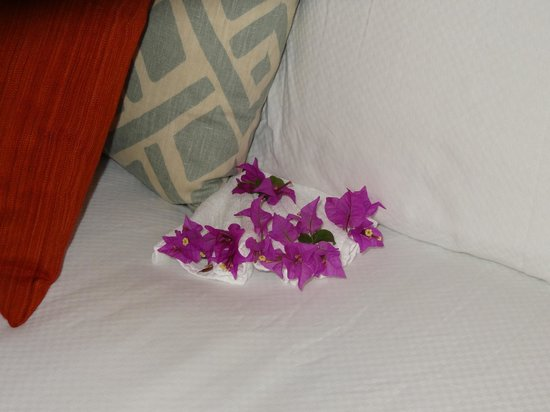 Alexandra Resort:                   Flowers on out bed