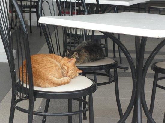 El Mouradi Club Kantaoui : Cats