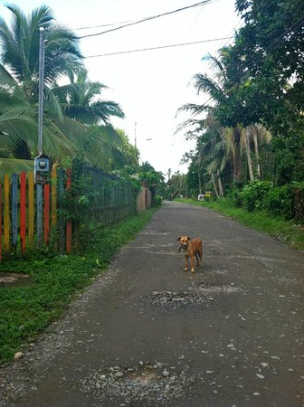 Playa Negra Guesthouse:                   Road into town