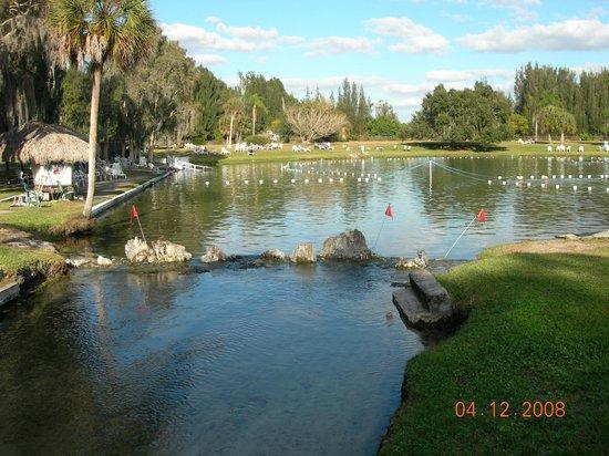 Warm Mineral Springs: W dnie jeziora sa 3 bijace zrodla, nadmiar wody odplywa do Zat.Meksyk.