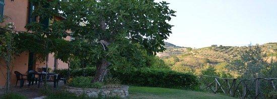 Agriturismo La Volpe e l'Uva: fico