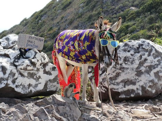 Basseterre, Saint Kitts: super cute donkey and monkey - tips accepted