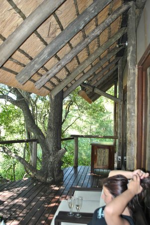 Rhino Post Safari Lodge :                   View from the terrace
