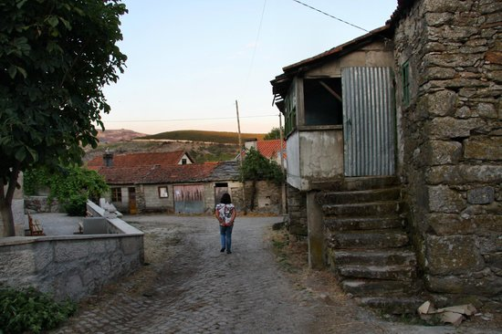 Norte de Portugal, Portugal: Pinheiro Velho...