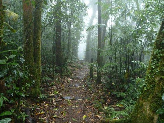 Mombacho Volcano: Mombacho