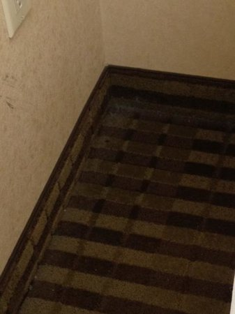Quality Inn Woodside : carpet is not clean