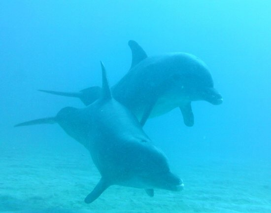 Tranquilseas Eco Lodge and Dive Center:                   Anthony's Key Dolphins