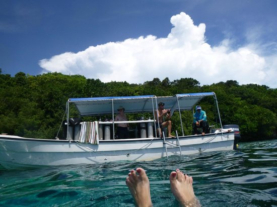 Dolphin Bay Resort & Peleliu Divers :                   Our dive boat
