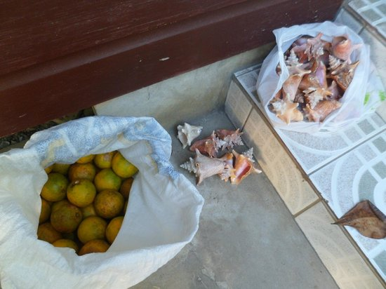 Nirvana on the Beach: Oranges for juicing and conch shell collection