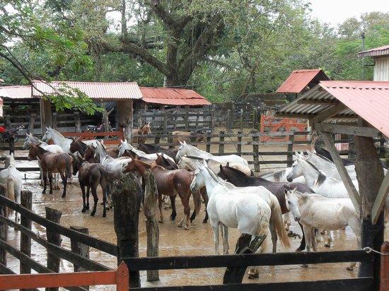 Hotel Hacienda Guachipelin:                   dieren in de haciënda