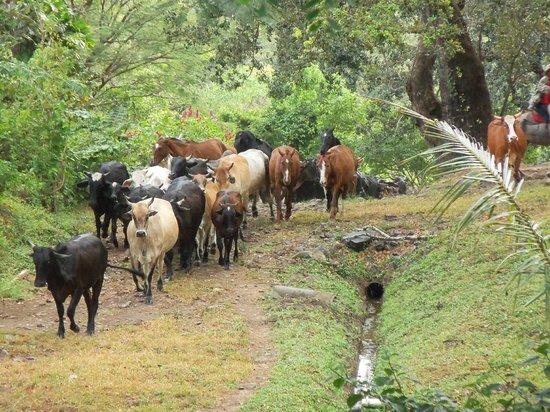 Hacienda Guachipelin:                   dieren in de haciënda