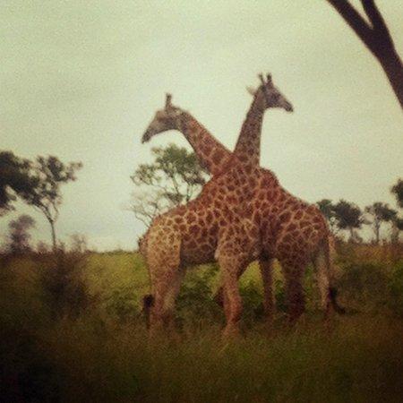 Tydon Safari Camp:                   Game drive, day one!