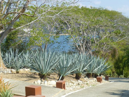 Las Brisas Huatulco:                   Along the path down to Ventura Beach from Stars