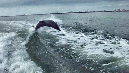 Dolphin Racer照片