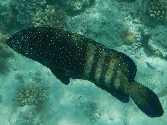 Summer Island Maldives: un parmi tant d'autre