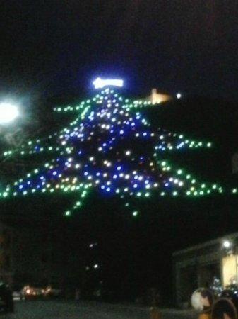 Beniamino Ubaldi: L'albero più grande del mondo !!!