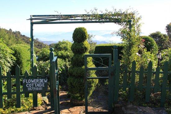 Heritance Tea Factory: Garden