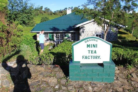 Heritance Tea Factory: Mini Tea Factory