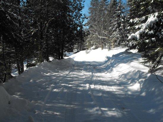 Manoir des pins: chemin vers l'auberge