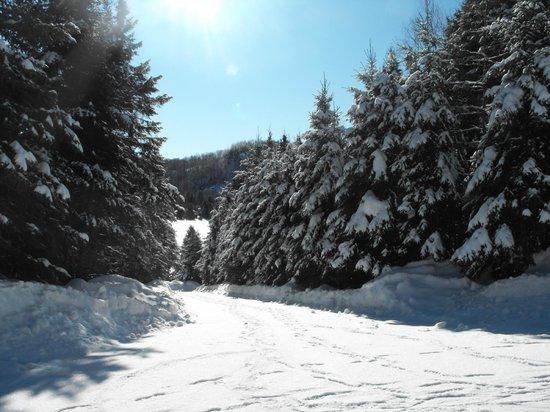 Manoir des pins: sentier