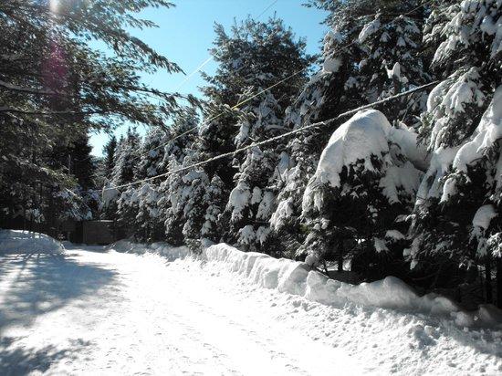 Manoir des pins: Paysage merveilleus