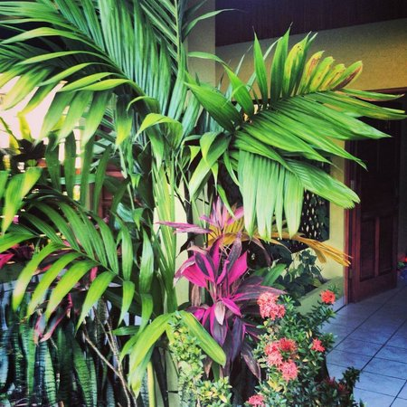 Hotel La Pradera:                   Nice plants outside of our room