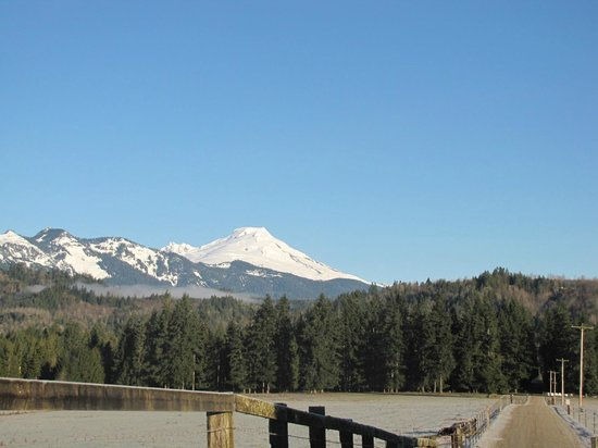 Ovenell's Heritage Inn :                   View of Mt Baker as you drive down to the cabins