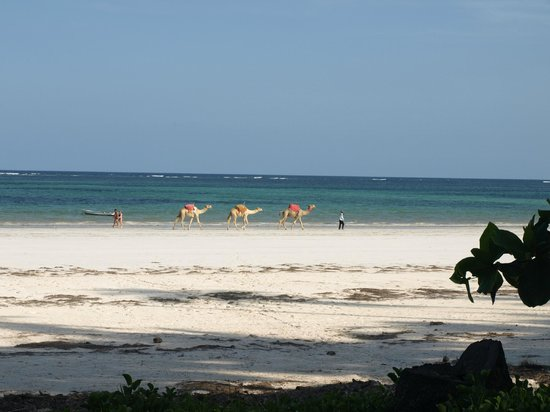 Almanara Luxury Villas:                   Beach with camels!