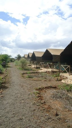 Kibo Safari Camp: le tende