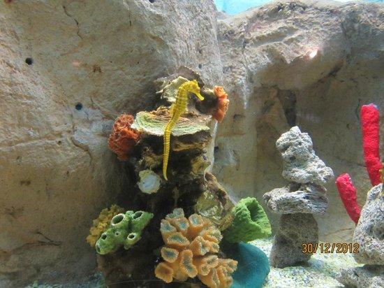 Acuario Mazatlan: La pecera de los caballitos de mar