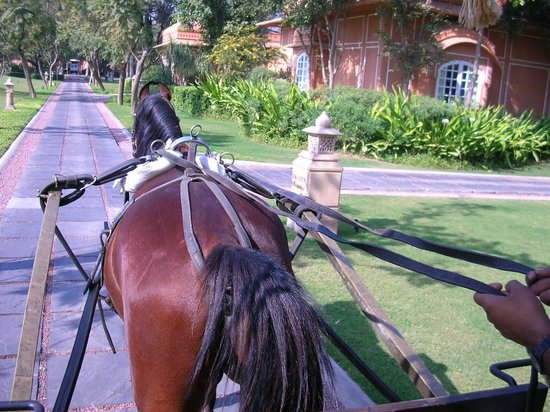 The Oberoi Rajvilas:                   horse and carriage escort