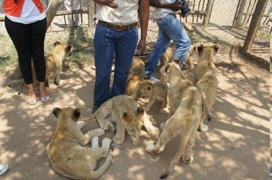 写真Lion and Safari Park枚
