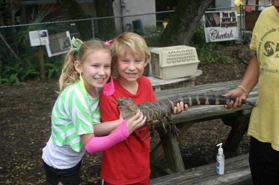 Suncoast Primate Sanctuary Foundation, Inc.: Kids are allowed hands on with alligators!