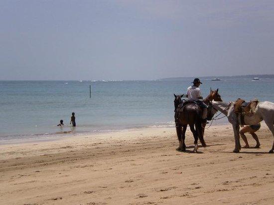 Quarta Praia : los caballos (se alquilan)
