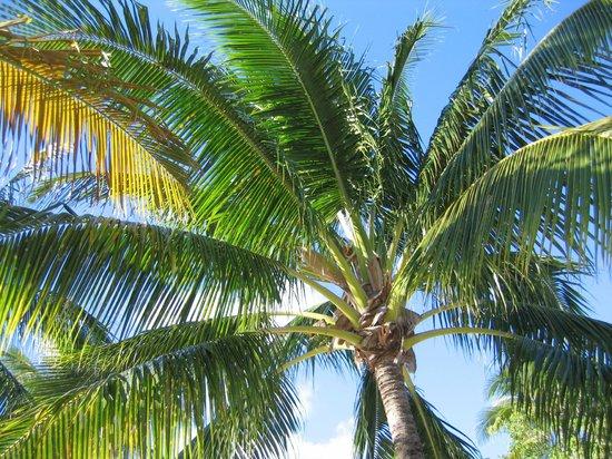 St. James's Club Morgan Bay - All Inclusive:                   palms at beach