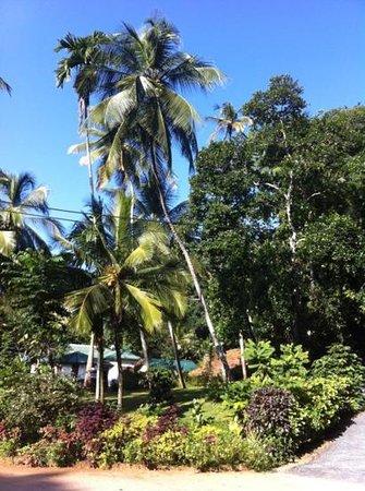 Clove Garden Kandy City:                   the garden