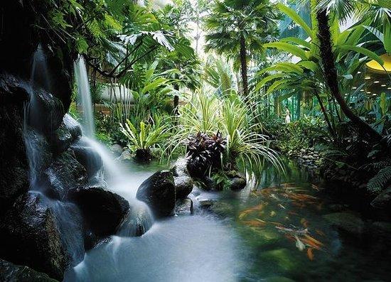 Shangri-La Hotel, Singapore: Koi Pond