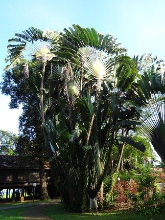 Club Med Cherating Beach: la jungle 